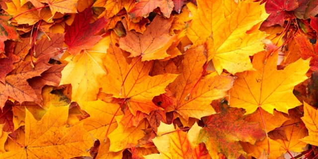38722499-autumn-leaves