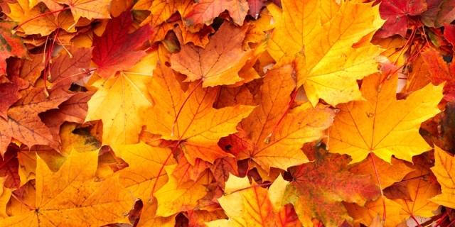 38722499-autumn-leaves