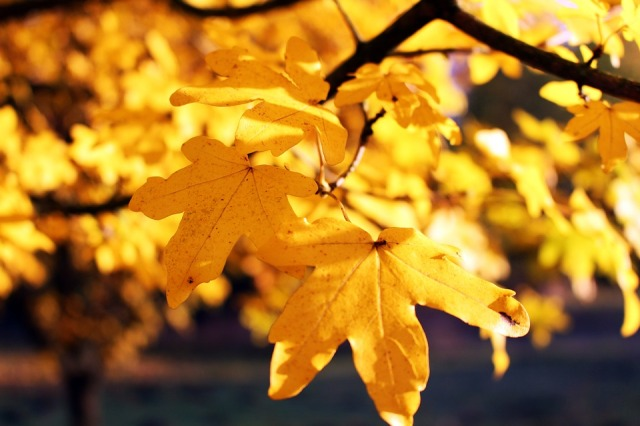 Autumn-Leaf-Time-Of-Year-Leaves-October-Nature-1876307.jpg