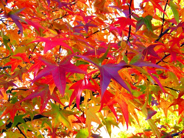 autumn-leaves-13016839608be.jpg