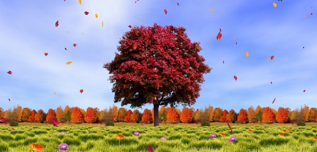 Autumn-trees-live-wallpaper.jpg