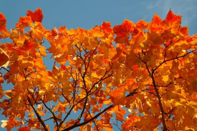 fall-foliage-228165_960_720.jpg