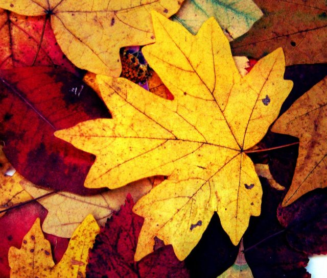 this_is_my_autumn__leaves__of_memory_by_annaarmona-d5hexz4